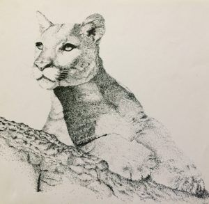 Drawing Animals (Ages 14+)