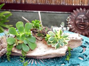 Members-Only Make & Mingle: Succulent Workshop